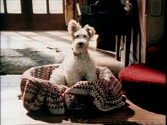 Bob the wire fox terrier dog from the Agatha Christie's Poirot episode Dumb Witness - I want this dog!