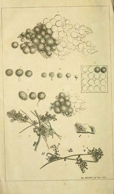 Bd.1 - Vermischte botanische Schriften. - Biodiversity Heritage Library