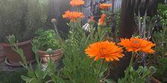 Health, Garden, Plants, Ali, Garten, Health Care, Lawn And Garden, Gardens, Ant
