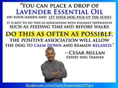 Cesar Milan uses doTERRA essential oils. Pretty amazing what the oils can do for your pets! For more information, check out my website at http://www.mydoterra.com/denaehimes/#/