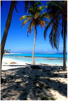 Halfmoon Caye, Belize Copyright: Pedro Carmo
