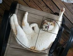 Cats are perfect! We do have proof this time, mind you. Ever heard of the Fibonacci sequence aka the Golden Ratio? Cute Cats, Funny Cats, Funny Animals, Cute Animals, Fun Funny, Animal Memes, Golden Ratio In Nature, Fibonacci Golden Ratio, Time Magazine