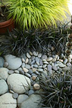 garden idea - Love this, and I have both plants, AND the stone. Gotta get 'em planted! garden idea - Love this, and I have both plants, AND the stone. Gotta get 'em planted! Back Gardens, Small Gardens, Outdoor Gardens, Formal Gardens, Pebble Garden, Gravel Garden, Japanese Garden Design, Japanese Gardens, Small Japanese Garden Plants