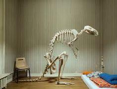 animal skeletons - Hledat Googlem