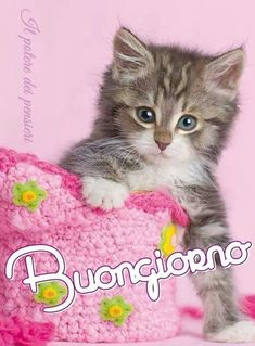 Italian Memes, Good Morning Good Night, Messages, Animals, Snoopy, Wallpapers, Illustrations, Cards, Painting