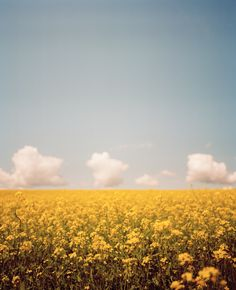 First-Stop » gold fields