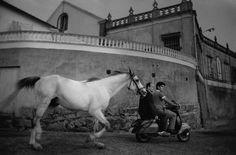 everyday_i_show: photos by Cristina Garcia Rodero. Spain. Galicia. Vigo. 1987. The horse that bathes in the sea.