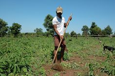 A man in #Cambodia tends to his crops after receiving a low-interest loan from Plan.