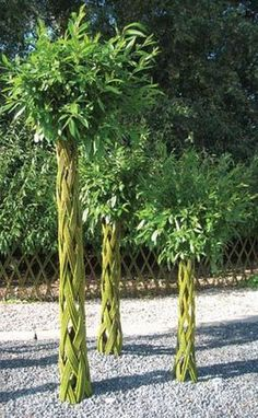 Salix trees - Quick statement, even if twined together at the top & in a container in the ground Garden Trees, Trees To Plant, Garden Art, Back Gardens, Outdoor Gardens, Living Willow, Permaculture Design, Tree Sculpture, Willow Tree