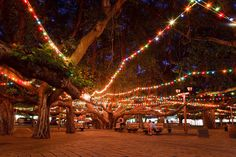 The Twinkliest Town In Hawaii Will Make Your Holiday Season Merry And Bright- Lahaina, Maui- The Lahaina Banyan Tree is the largest banyan tree in Hawaii, and one of America's largest as well, with its trunk and aerial root system covering acres Christmas Town, Magical Christmas, Christmas Lights, Tropical Christmas, Christmas 2017, Xmas, Lahaina Maui, Oahu, Maui Vacation