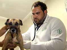 Sobe para 23 o número de animais vítimas de matança em Morro Agudo | Mais sete cães foram encontrados mortos nas ruas da cidade em dois dias. Veterinário suspeita que bichos tenham sido envenenados com 'chumbinho'. http://mmanchete.blogspot.com.br/2013/04/sobe-para-23-o-numero-de-animais.html#.UV9aapNQGSo