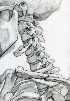 Anatomy Drawing Medical Skeleton Studies by James Julier - Anatomy Sketches, Anatomy Drawing, Art Drawings Sketches, Life Drawing, Figure Drawing, Painting & Drawing, Body Painting, Skeleton Drawings, Skeleton Art