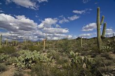 There's something about the Arizona desert. Gorgeous.