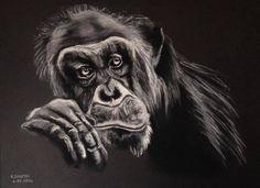 Le chimpanzé triste ou la tristesse du singe. Clair obscur pastel sur papier noir. : Peintures par katia-golessi-les-toiles-de-katia