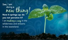 """ISAIAH 43:19 ~ """"See, I am doing a new thing; now it springs up. Do you not perceive it? I am making a way in the wilderness and streams in the wasteland."""""""