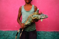 Honduras -   Young boy holding an endangered iguana. His poverty may lead him to sell it as food - Kilometro Treinta.