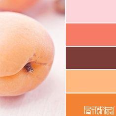 Soft Apricot #patternpod #patternpodcolor #color