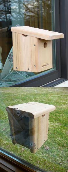 Kettle Moraine Window Mount Bird House - My Favorite Things