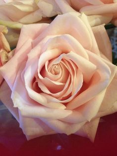 Sweet Avalanche Roses - has to be the best Rose ever so so perfect #flowers #roses pic.twitter.com/qsCsIJOPB5