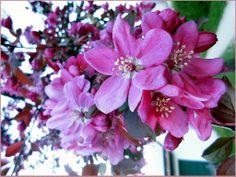 Collection Images : Les plus belles FLEURS DU MONDE : Infos  + marccantin.com   * Tous les dons sont appréciés,qu 'ils soient petits ou grands.. Merci : ) La plupart des cartes de crédit sont acceptées.. Membre Pay pal : cantinmarc@gmail.com https://www.paypal.com/ca/mrb/pal=N7EC6QVR9PE8S