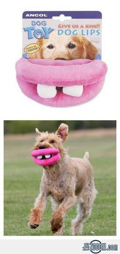 Dog Lips Toy, haha this is so funny but Daisy would chew them to nothing in no time..!