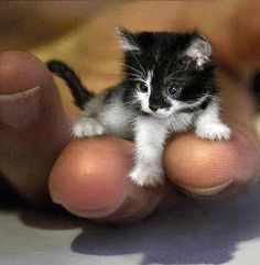 the smallest cat of the world... I think;)