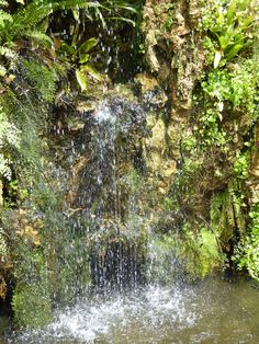 tufa and ferns with water at La Bambouseraie de Cévennes