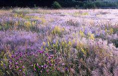 michigan wildflower landscape | Flower Identification Guide: Planning a Perennial Wildflower Garden