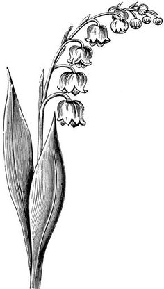 Need some drawing inspiration? Here's a list of 25 beautiful flower drawing ideas and inspiration. Why not check out this Art Drawing Set … Piercings, Piercing Tattoo, Tigh Tattoo, May Birth Flowers, Beautiful Flower Drawings, Tattoo Schwarz, Birth Flower Tattoos, Lily Of The Valley Flowers, Flower Sketches