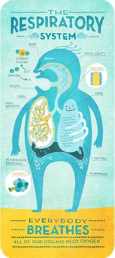 The Respiratory System - Rachel Ignotofsky. Lilly and I were talking about this the other day, have to show her this!