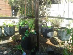 A day in the life: The hanging gardens