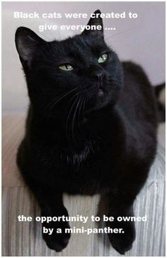 You have a need to lots of humor if you want to get through your day without losing your sanity.These black Cat Memes are helpful for that.Read This Top 24 Black Cat Memes Baby Animals, Funny Animals, Cute Animals, Animals Images, Crazy Cat Lady, Crazy Cats, Beautiful Cats, Animals Beautiful, Cool Cats