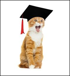 Couldn't help myself. Too funny: 6 Organizations That Would Award Cats College Scholarships