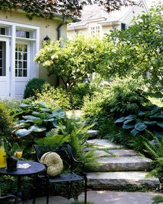 pathways / shade garden