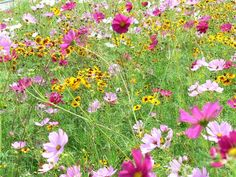 Fields of wild flowers.    I remember running through fields of wild flowers behind Fanshawe College when I was little pretending to be Laura Englis from Little House on the Prairie!