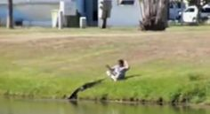 Video: Neighbor calls and feeds alligator in Florida senior living community