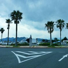 ヤシノキがこんなにあったんだ。 #30jidori (@ 青海島シーサイドスクエア) [pic]: 4sq.com/13obrBu