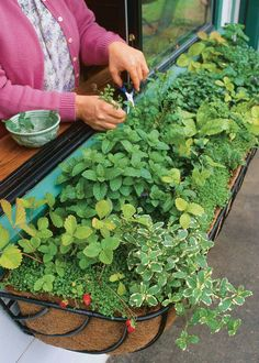 Herb Garden - Window Box Herb Garden by Vegetable Gardener - Outside kitchen window? Genius Herb Garden Ideas that anyone can do! How to plant an herb garden in a container, a window box, a full garden, a coffee cup or in a metal bucket. Herb Garden Design, Vegetable Garden Design, Herbs Garden, Box Garden, Flowers Garden, Shade Garden, Herb Garden Planter, Herb Plants, Herb Garden Indoor