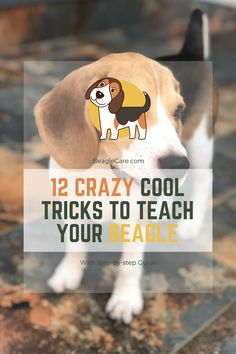 Beagle Picture Frame makes a Perfect gift for Beagle Lovers Hand Painted Holds a 2 12 x 3 15 Picture