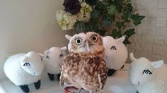 More from the London Owl Bar: http://www.awesomelycute.com/2015/02/london-opens-a-bar-where-you-can-pet-owls/