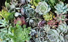succulents wallpaper - Google Search