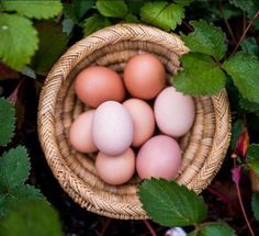 Yummy eggs from our chickens. Time for an cook-up. Crack some shells and create your perfect meal. The options are endless... omelettes, scrambled, frittatas, soufflé bring it on.
