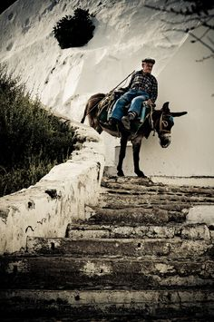 Santorini, the Old Way of Travel, road a mule to the top! .