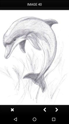 Animal Drawings Images For > Pencil Drawings Of Dolphins Art Drawings Sketches Simple, Pencil Art Drawings, Animal Sketches, Amazing Drawings, Love Drawings, Easy Drawings, Drawing Ideas, Realistic Animal Drawings, Pencil Drawing Tutorials