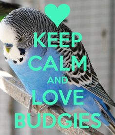 KEEP CALM AND LOVE BUDGIES