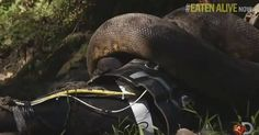 One Man Was Obsessed With Being Eaten Alive By An Anaconda, But He Failed