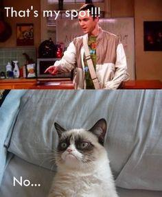 Grumpy Cat meets Sheldon......yesssssss