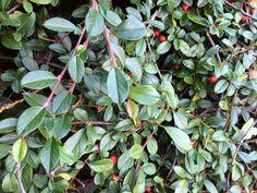 25 talajtakaró növény, melyekkel gyönyörűvé teheted a kertet! Landscape, Plants, Gardening, Winter, Winter Time, Scenery, Lawn And Garden, Plant, Corner Landscaping
