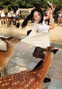 Meanwhile in Japan. Typical experience in Nara! Those deer will eat YOU if you're holding a senbei! Japanese Culture, Japanese Girl, Poses, Japon Tokyo, Turning Japanese, Nihon, Nara, Fukuoka, Okinawa