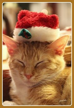 Christmas Ginger Kitty Taking a Little Snooze.